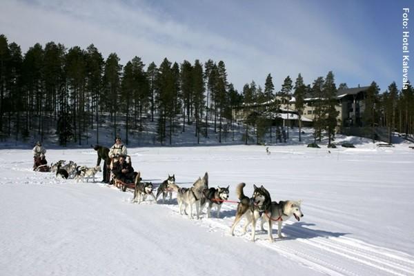 Finnland Husky Tour