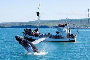 Island Wale
