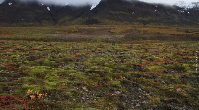Wanderreise am Vatnajökull