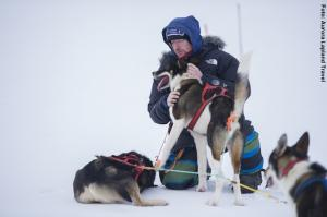 Huskys-in-Lappland