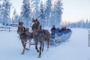 Glasiglus Finnland, Kakslauttanen,  Pferdeschlitten