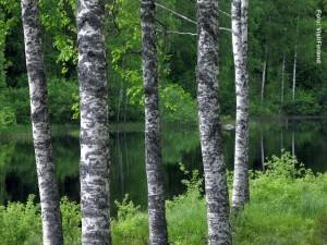 Finnland_Karelien
