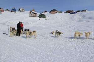 Groenland Huskytour