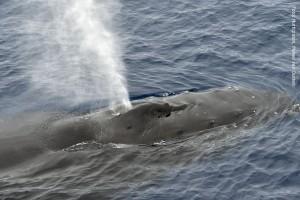 Antarktis Wal