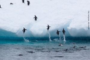 Antarktisreise Pinguinkolonie