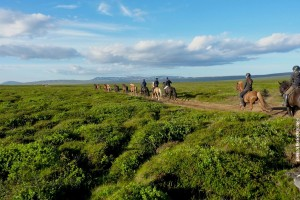NordIsland Wanderreiten
