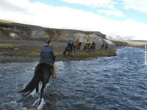 Wanderreiten Island Herde