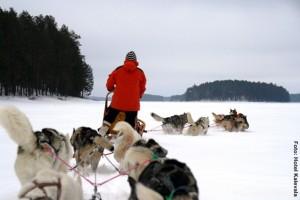 Finnland_Hundeschlittentour