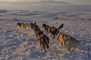 Winterreisen_Lappland_Huskys