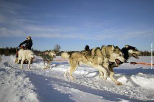 Huskytour Rovaniemi